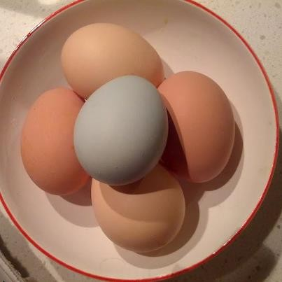 colourful eggs from urban chickens
