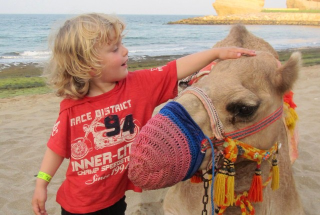 camel on the beach at Shangri-la Muscat