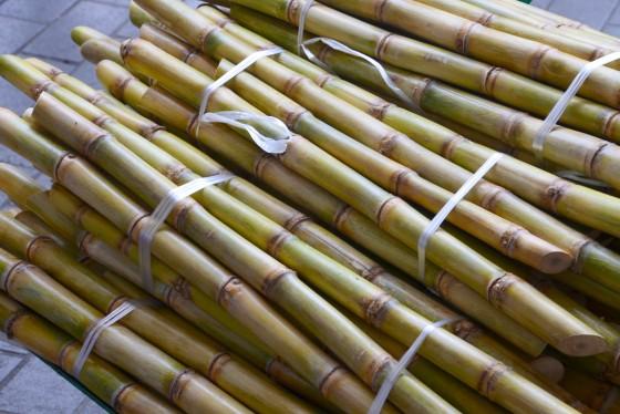 sugar cane cabramatta