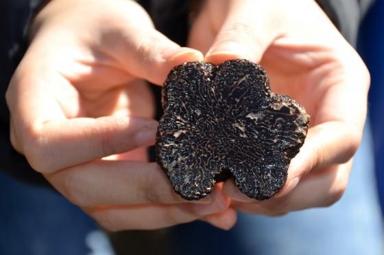 Black Black Truffle at Terra Preta Truffles, Braidwood