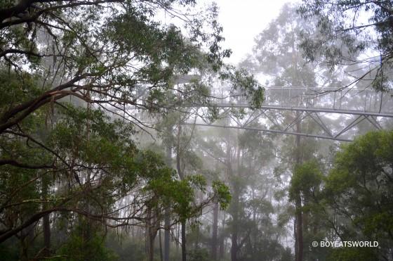 Illawarra Fly Skywalk in the mist