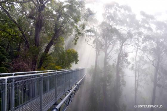 stunning views through the mist at Illawarra Fly