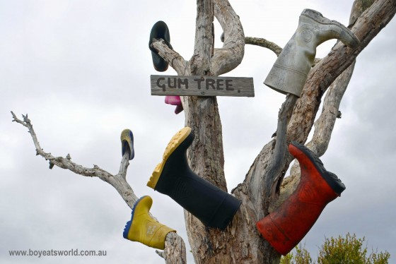 Gum tree, Pieman Heads