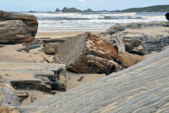 logs strewn beach at Pieman Heads