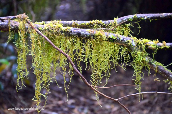 lovely lichen corinna