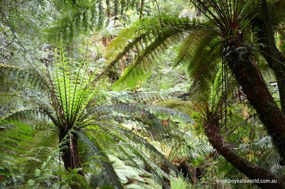 Tarkine ferns, Corinna