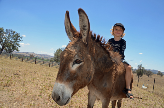 Donkey ride at Lowe Wine