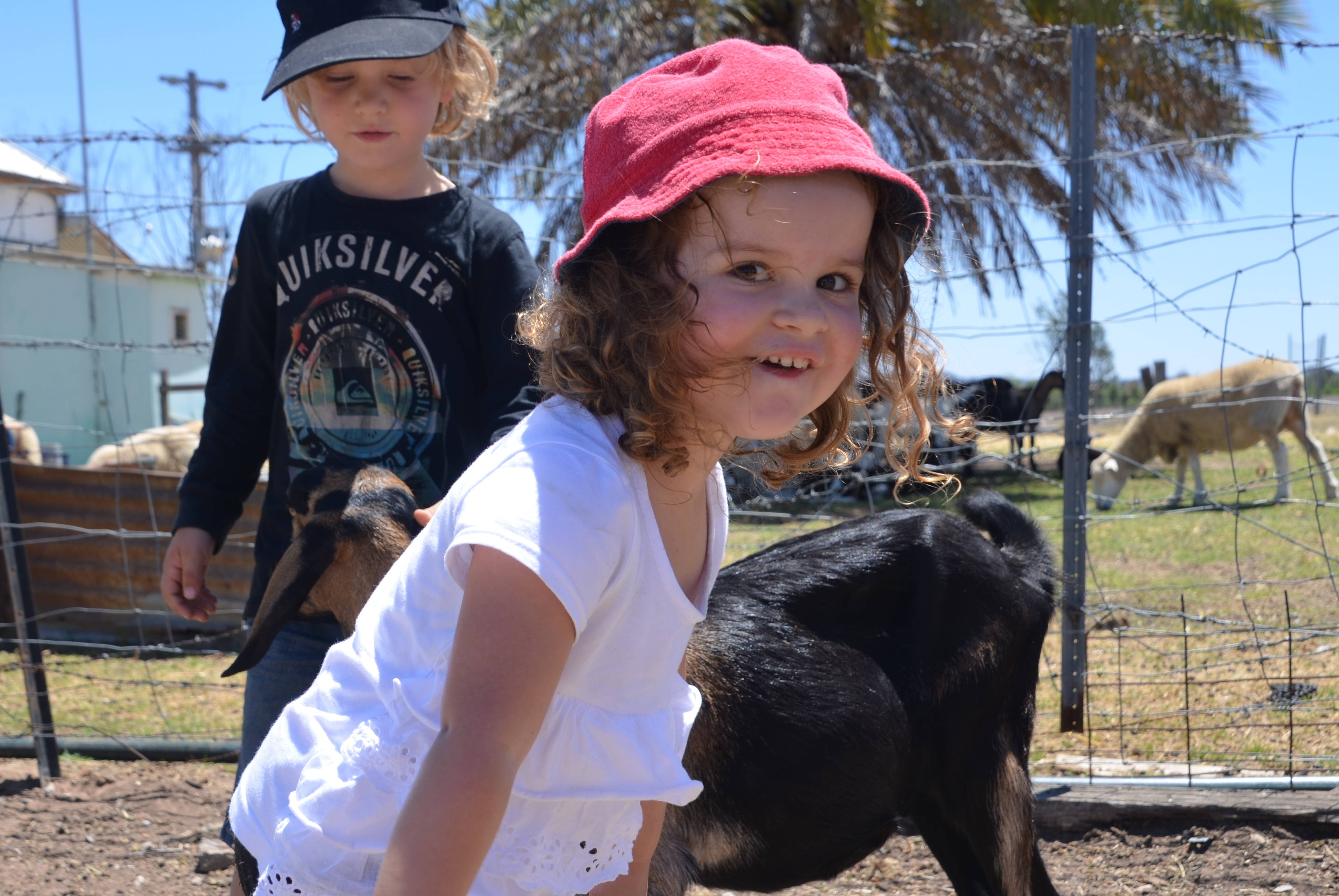 Groping goats at Leaning Oak Dairy, Mudgee