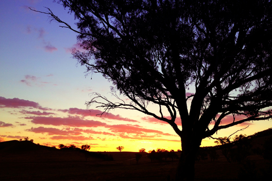 Sunset at Old Bara Homestead, Mudgee