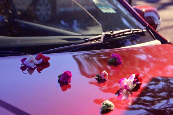 petals on the bonnet of the Territory Titanium