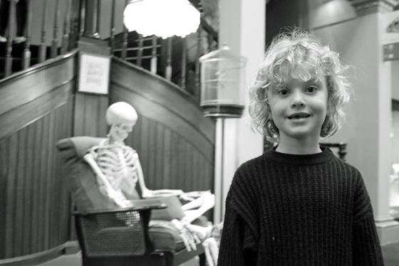 The skeleton room at the Australian Museum