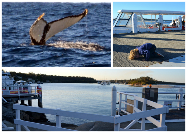 Huskisson Whale Watching