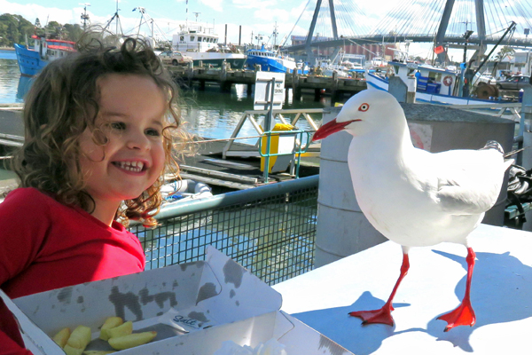 Seagulls at Sydney Fish Markets