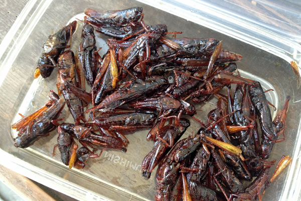Sticky crickets in Omotesando Street