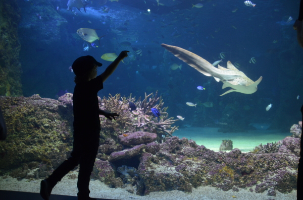 kids at SEALIFE sydney Aquarium