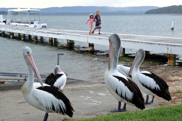 pelican parade at Rafferty's resort