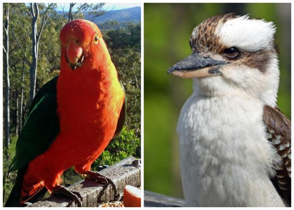 Birds abound at Banjo's Bush Retreat