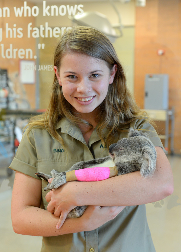 Bindi with Koala patient at Australia Zoo Wildlife Hospital