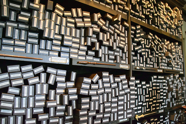 Wads of wands at Ollivanders Wizarding World of Harry Potter Osaka