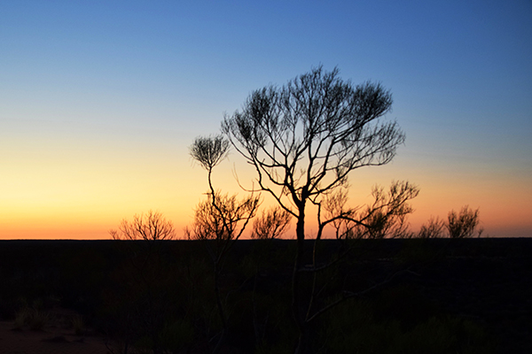 Sunset over the desert at Tali Wiru Uluru
