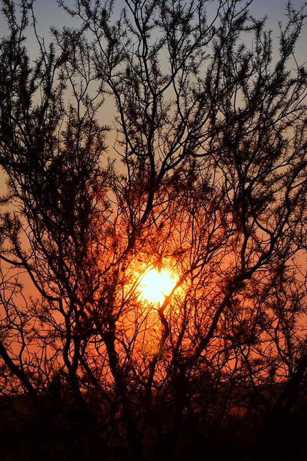 Sunset at Tali Wiru Uluru