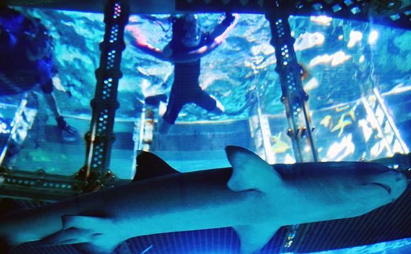 Raffles takes to the tank at SEA LIFE Sydney Aqaurium