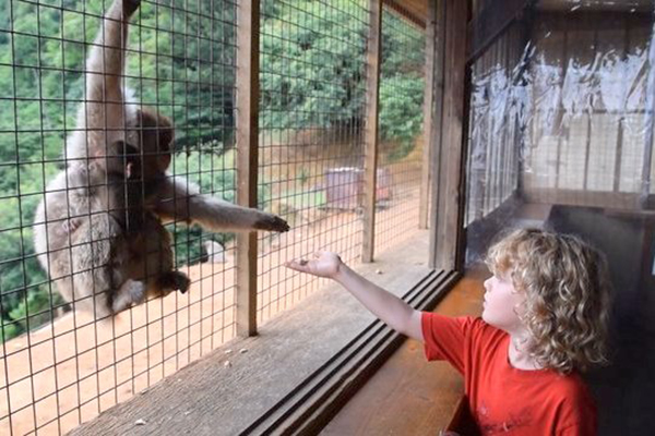 feeding the macaques at Arashiyama's Iwatayama Monkey Park