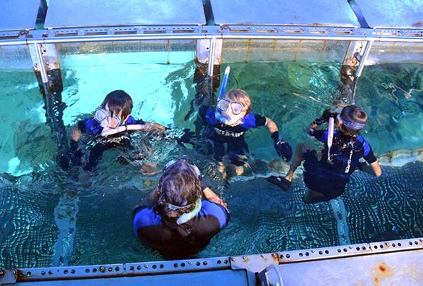 In the tank at SEALIFE SYdney Aquarium