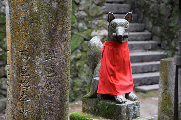which are said to be the messengers of Inari and their are hundreds at Fushimi Inari