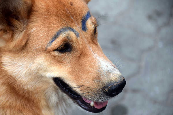 Meet 'eyebrows' a friendly stray who'd had a run in with a sharpie