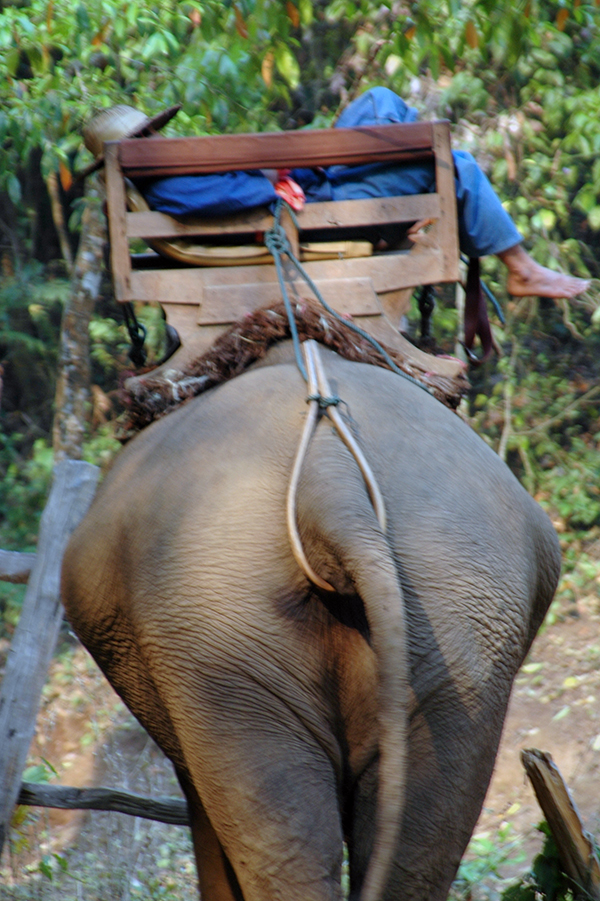 Why we said no to riding elephants in Thailand