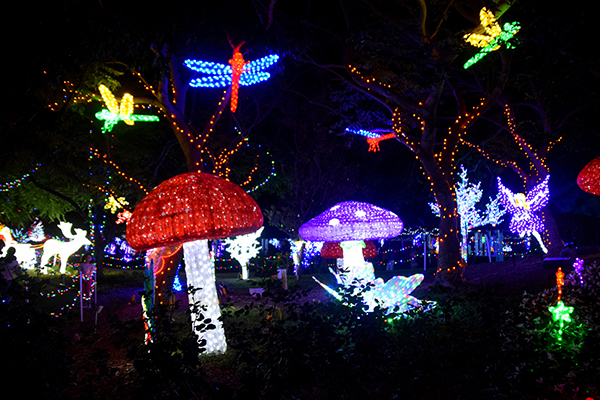 Fairy Garden at Hunter Valley Gardens Christmas Light Spectacular