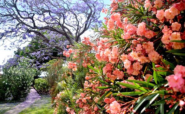 Spring flowers at Cockatoos Island