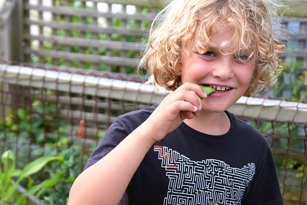 Raffles chomping on fresh peas from the Palette Dining roof top garden