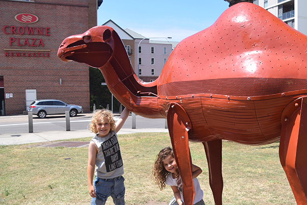 Camel capers in Newcastle