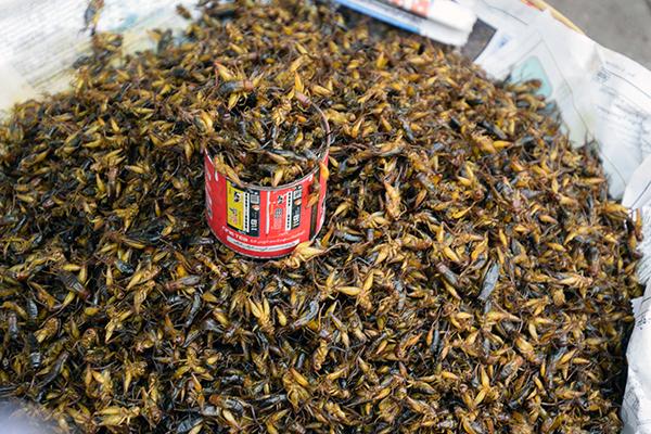 Bugs on the street in Myanmar