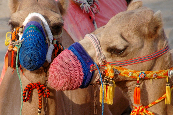 Shangri-La Barr Al Jissah Resort & Spa - Oman with kids