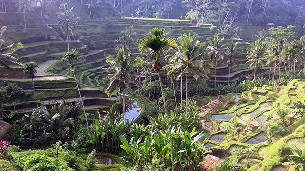 Bali by kids; The ncreidble landscape is just one reason it has got under our skin