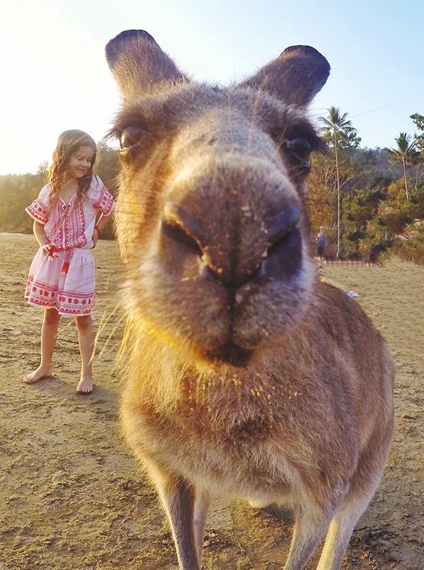 Kangaroo on the beach with kids at Cape Hillsborough