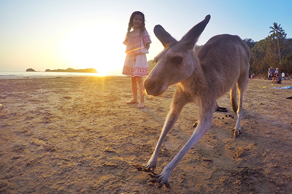Kangaroos at Sunrise at Cape Hillsborough