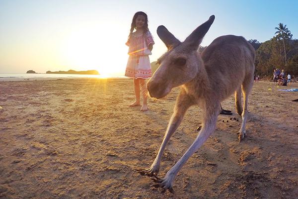 Kangaroos at Sunrise at Cape Hillsborough