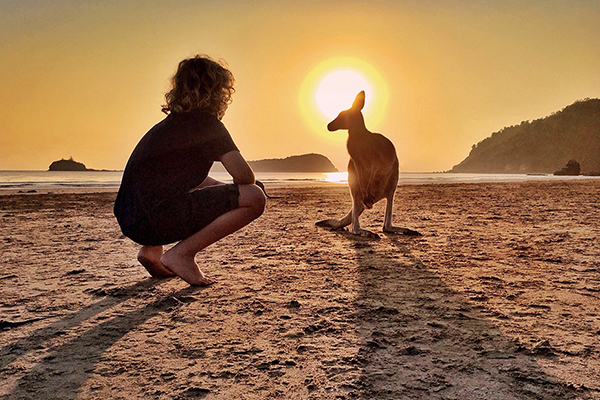 Cape Hillsborough Kangaroos at sunrise with Kids