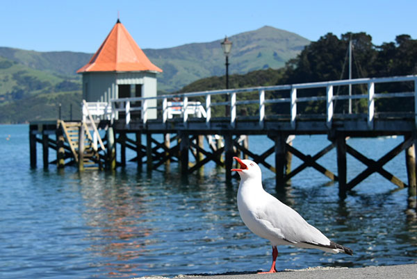 Akaroa Harbour New Zealand