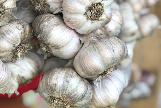 Koonya Garlic Festival is a celebration of the popular ingredient