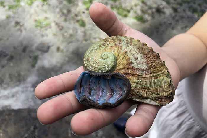 Shells on the beach Tasman Peninusla