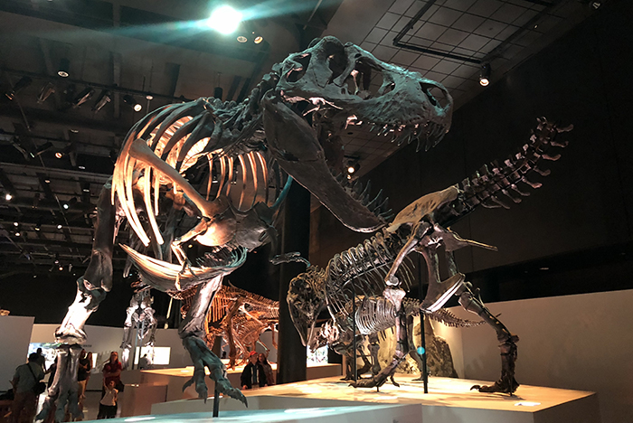 Dinosaurs galore at The Morian Hall of Paleontology at Houston Museum of Natural Science