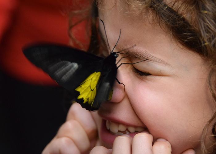 Otago Museum Tūhura butterfly garden: Dunedin with kids