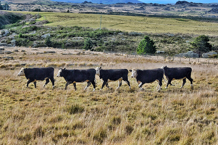 Cow Boyband Dunedin's Taieri Gorge Railway with kids
