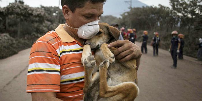 Image courtesy World Animal Protection