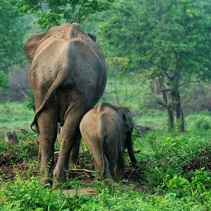 Elephant family - Image courtesy World Animal Protection